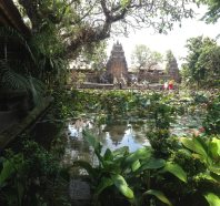 lotus pond and temple